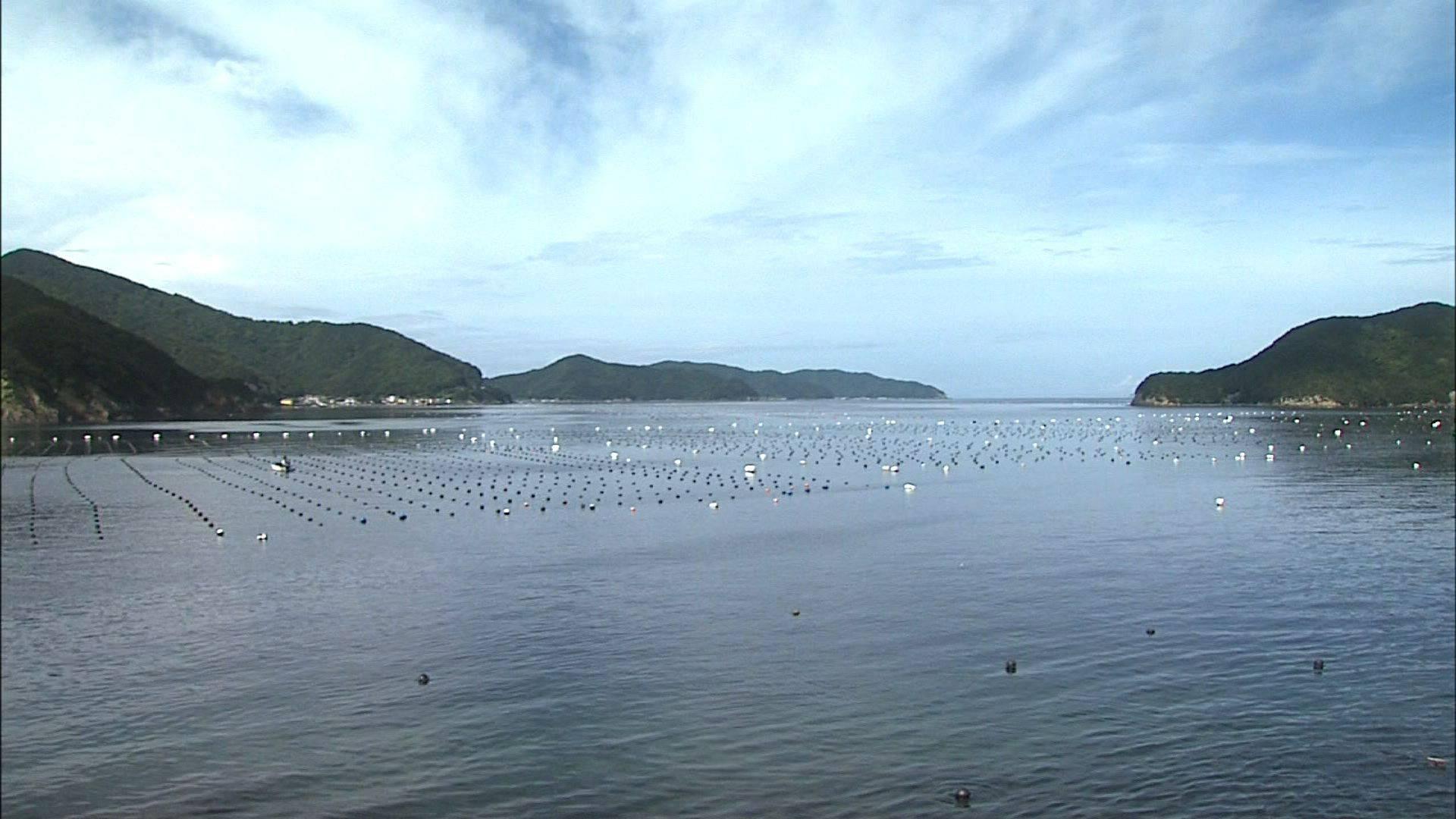 真珠養殖が盛んな宇和海